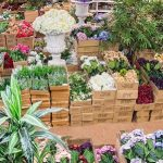 Why Buying Plants Wholesale Is Worth It